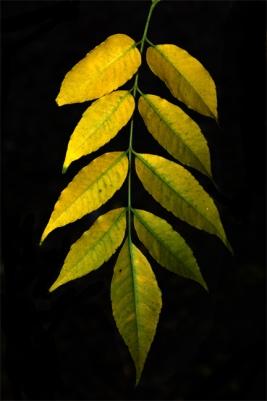 branch-color